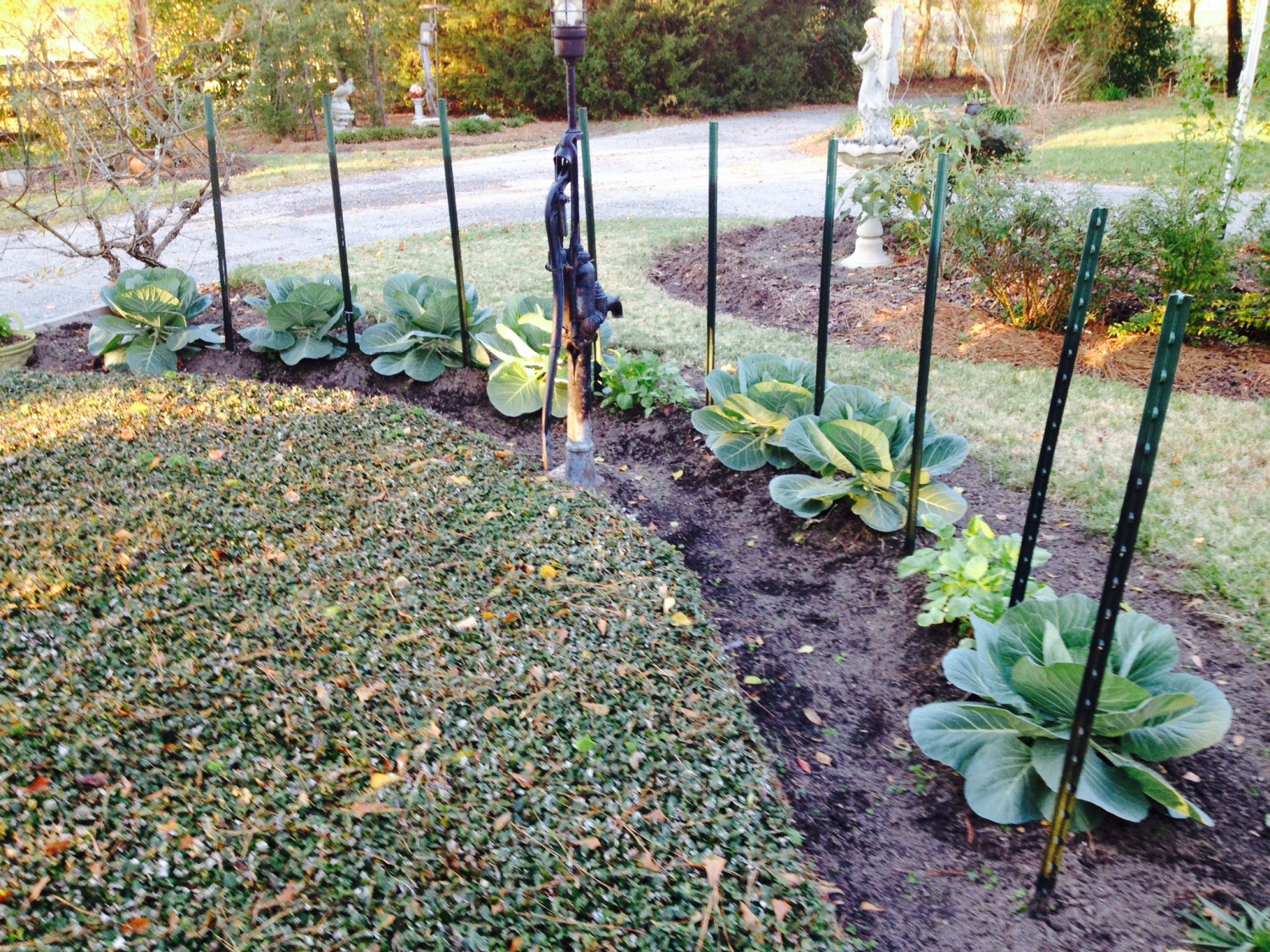 Unique East Texas Winter Garden Vegetables  Texas Forest Country Living With Licious Narrow Garden Ideas Besides Mexican Restaurants Covent Garden Furthermore Cheetah Run Busch Gardens With Astonishing  X  Garden Shed Also Palace Gardens Terrace In Addition Waikiki Gardens And Zen Garden Leatherhead As Well As Childrens Garden Play Area Additionally Laguna Vista Garden Resort From Texasforestcountrylivingcom With   Licious East Texas Winter Garden Vegetables  Texas Forest Country Living With Astonishing Narrow Garden Ideas Besides Mexican Restaurants Covent Garden Furthermore Cheetah Run Busch Gardens And Unique  X  Garden Shed Also Palace Gardens Terrace In Addition Waikiki Gardens From Texasforestcountrylivingcom