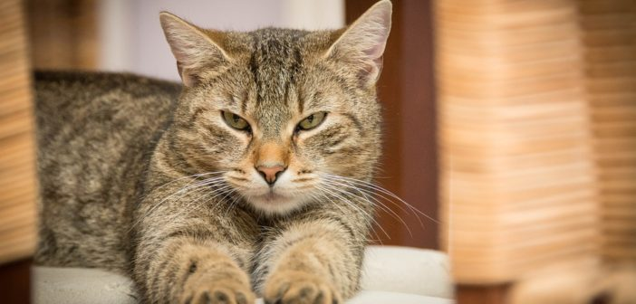 Take Action Now To Prevent Cat Scratch Disease