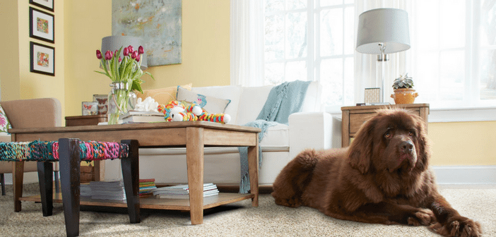 Pet Owners: Tips To Maintain A Beautiful Home