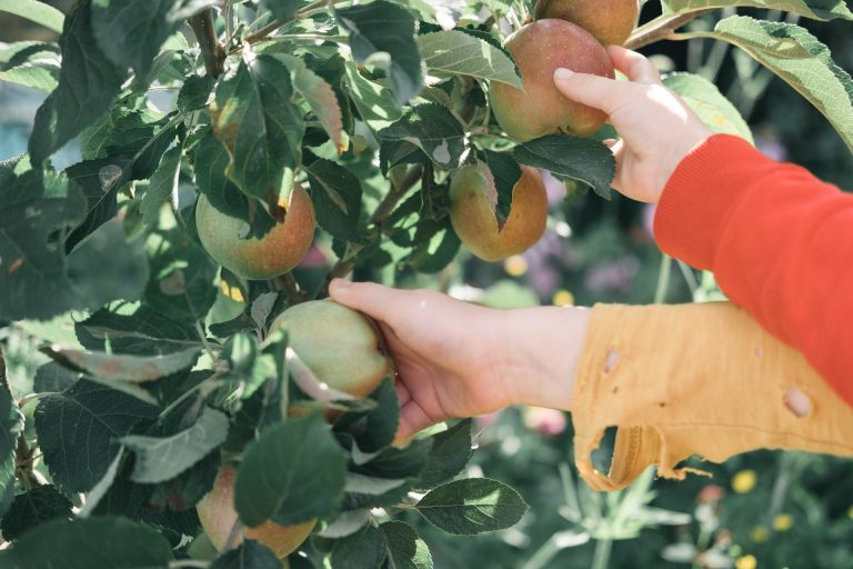 Home Grown Fruit Seminar Set for Tuesday, Sept 21